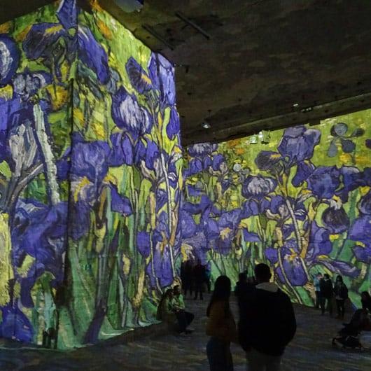 baux-de-provence-students-carriere-de-lumiere-flowers